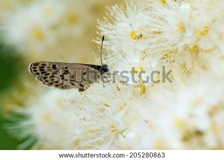 butterfly with white flowers in the nature