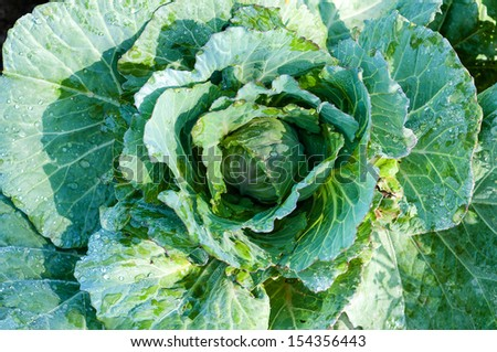 assesment of pesticide use on cabbage The use of data on cholinesterase inhibition for risk assessments of organophosphorous and carbamate pesticides pesticide cumulative risk assessment: framework for screening analysis contact us to ask a question, provide feedback, or report a problem.
