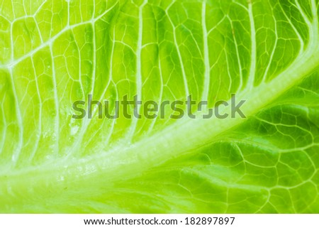 Cabbage leaves macro background