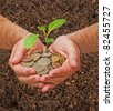 Cabbage seedling in hands - stock photo