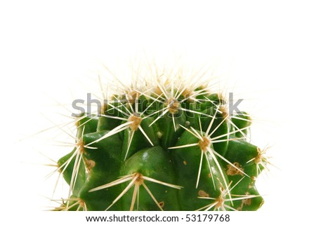 cactus is isolated on a white background