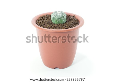 Cactus isolated on white background.