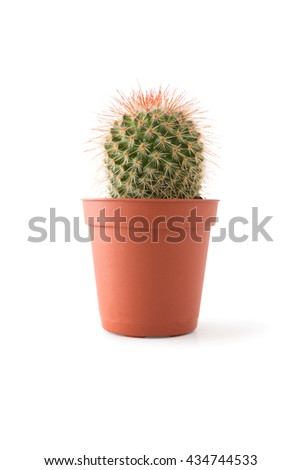 Cactus on pot, isolated on white background, clipping path