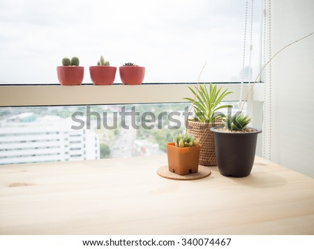 Cactus plant on the edge of office window.