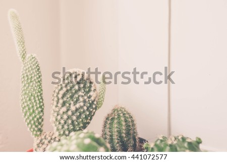 Cactus with white background Minimal Japanese style. Image is vintage effect and low light & Cactus Stock Photo 653106337 - Shutterstock azcodes.com