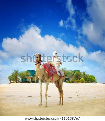 Camel on Dubai Island Beach, United Arab Emirates