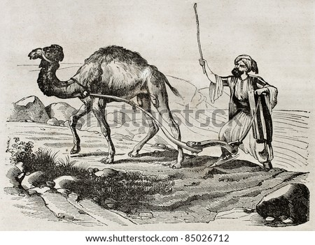 Camel plowing in Lebanon, old illustration. By unidentified author, published on Magasin Pittoresque, Paris, 1840
