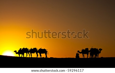 camels in desert by sunset yellow black