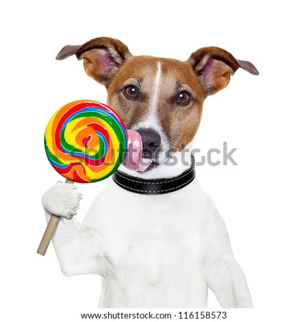 candy lollipop  licking  dog