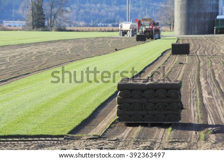 Carpets of turf or grass is stripped away to be sold commercially/Harvesting Sod or Turf/Carpets of turf or grass is stripped away to be sold commercially.