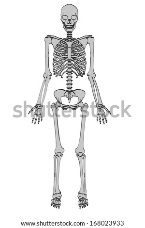 cartoon image of male skeleton