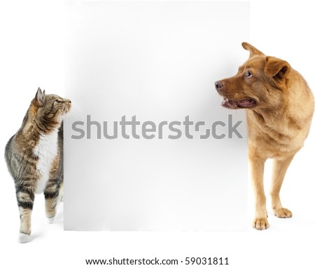 Cat and dog side to side looking at banner