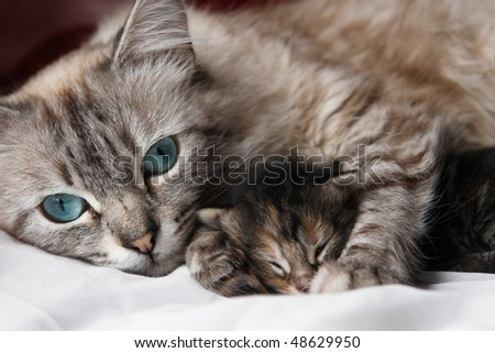 Cat and her kitten