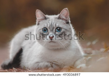 Cat at the autumn background