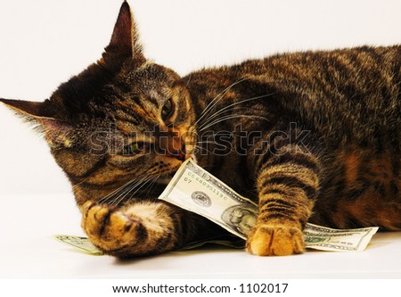 Big Luck Cat Large Gold