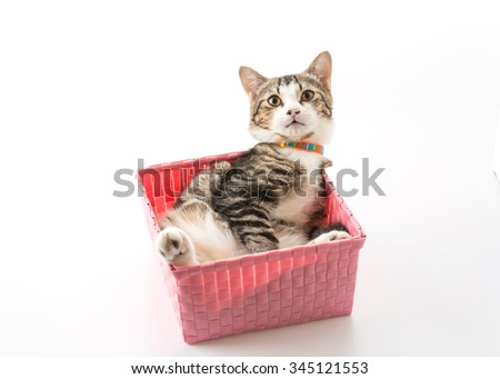 cat in basket on white background