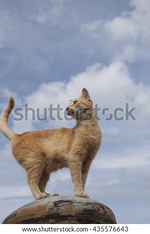 Cat in the air. Blue sky and clouds in background.