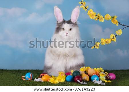 cat suit dildo rabbit