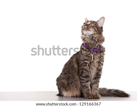 Cat looking towards white space - easy to expand for use.