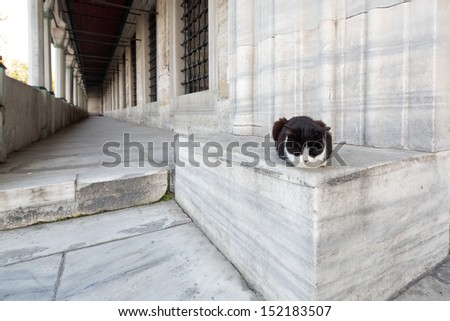 Cat lying at the side entrance of the Blue Mosque, Sultanahmet, considered to be the last great mosque of the classical period, Istanbul, Turkey