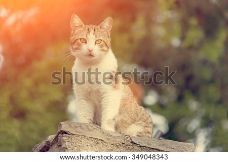 Cat on a grass background unturned
