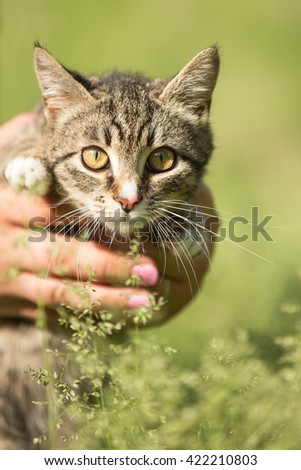 Cat portrait outdoors on the grass in hands