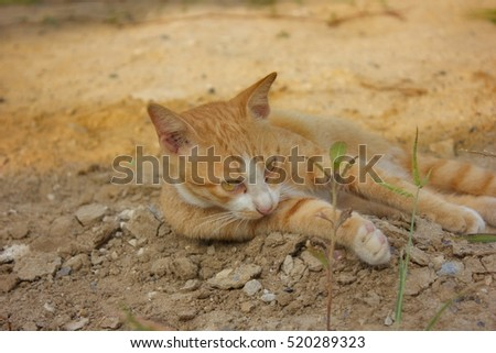 Cat relax on the ground
