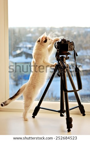 Cat standing on his hind legs to inspect camera on the tripod