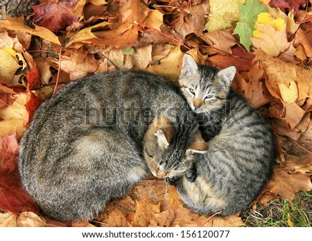 cat with baby cat sleeping in bright autumn leaves in Druskininkai, resort in Lithuania
