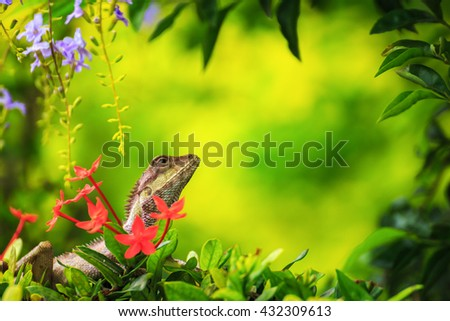 chameleon in green nature