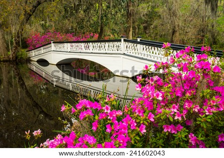Charleston South Carolina Spring flowers and blooming azaleas garden in lowcountry SC