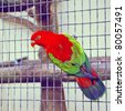 Chattering lory in aviary - stock photo