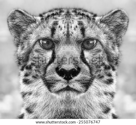 Cheetah Portrait Mirrored and Digitally Painted in Graphic Art Style Against Blurred Foliage Background in Black and White