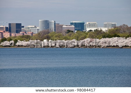 Cherry blossoms around the Tidal Basin in Washington DC near Jefferson Memorial with Rosslyn city skyline