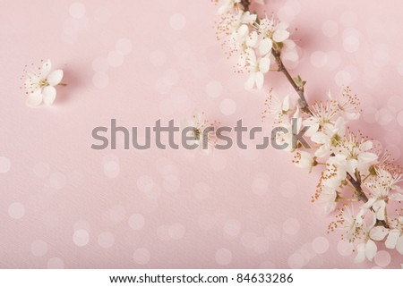 Cherry blossoms on pink background.