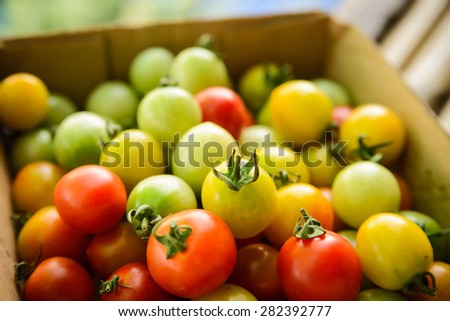 Cherry tomatoes in fresh market