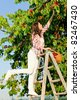 Cherry tree beautiful woman harvest summer garden climb ladder - stock photo