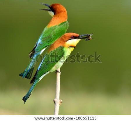 Sunbird Stock Photo 548806672 - Shutterstock - photo#48