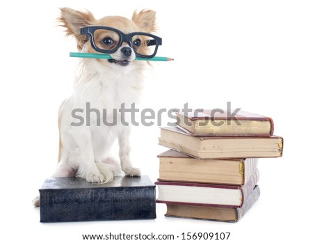chihuahua and books in front of white background