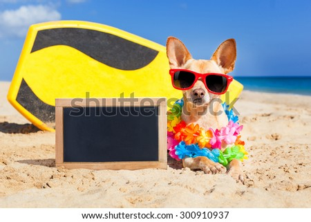 chihuahua dog  at the beach with a surfboard wearing sunglasses and flower chain on summer vacation holidays  at the beach , with empty blank blackboard or banner