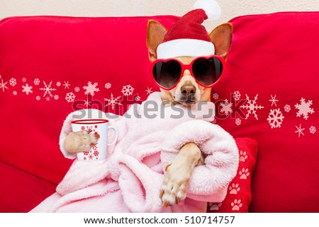 chihuahua dog relaxing  and lying, in   spa wellness center ,wearing a  bathrobe and funny sunglasses, drinking mug cup of coffee or tea