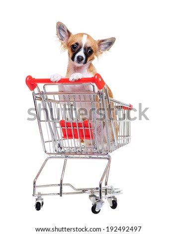 chihuahua dog sitting in a  shopping cart  front view