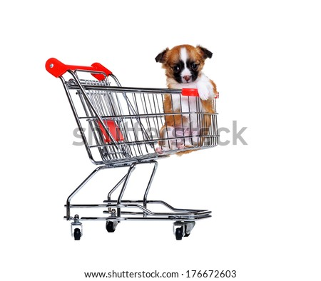 chihuahua puppy in a shopping trolley