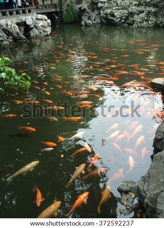Down stream view stock photo 574071073 shutterstock for Chinese koi pond