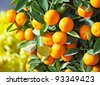 chinese kumquat for chinese new year - stock photo