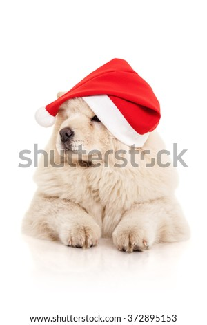 Chow-chow puppy in a Santa Claus hat