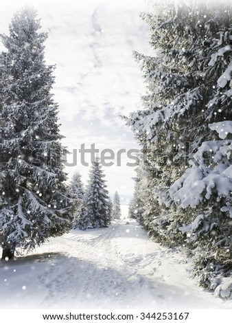 Christmas background with snowy fir trees. Winter snow background