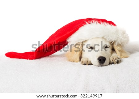 Christmas labrador puppy sleeping