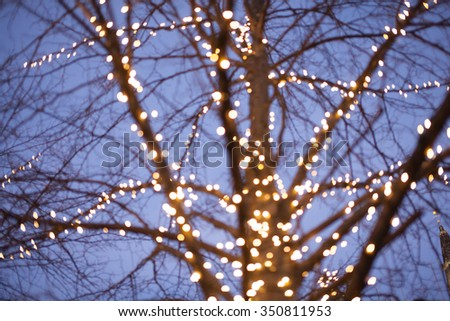 Christmas light on a tree