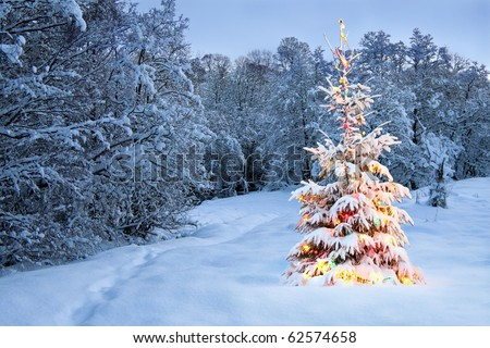 christmas tree in snow with colored lights - Snow Christmas Tree